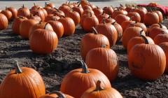 LSB pumpkins